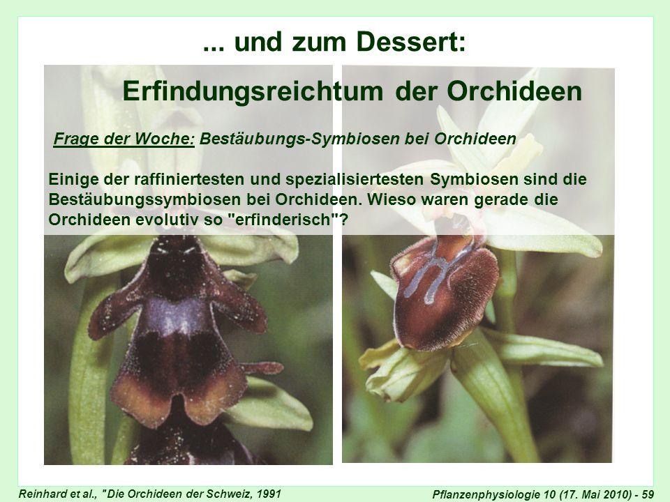 Frage der Woche: Erfindungsreichtum der Orchideen