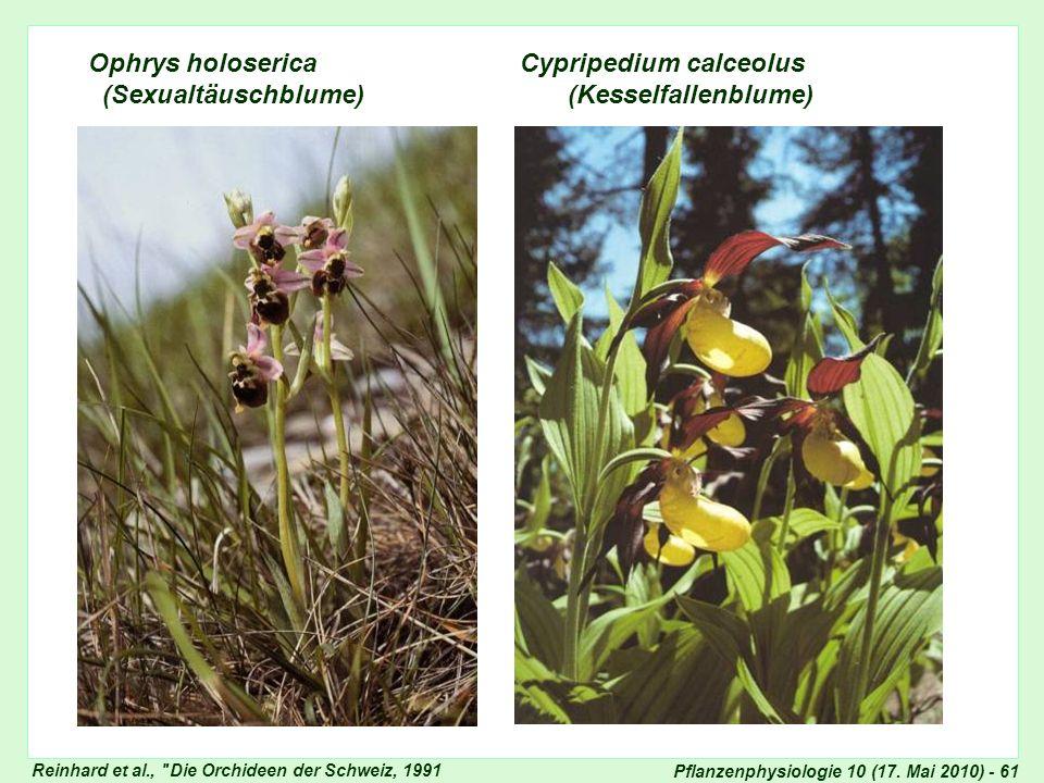 Ophrys und Frauenschuh