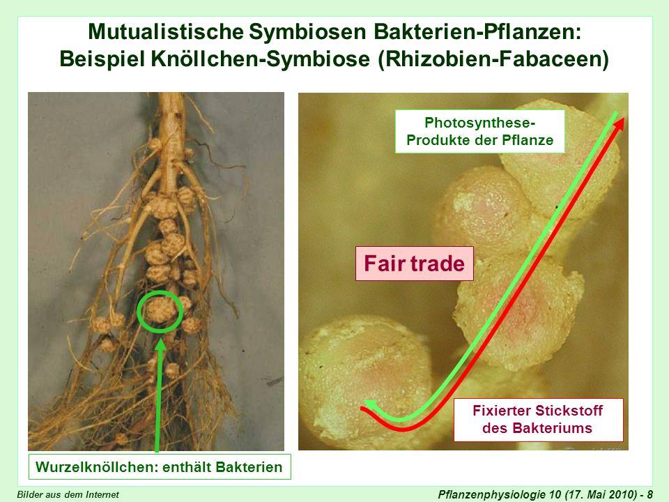 Mutualistische Symbiosen Bakterien-Pflanzen: