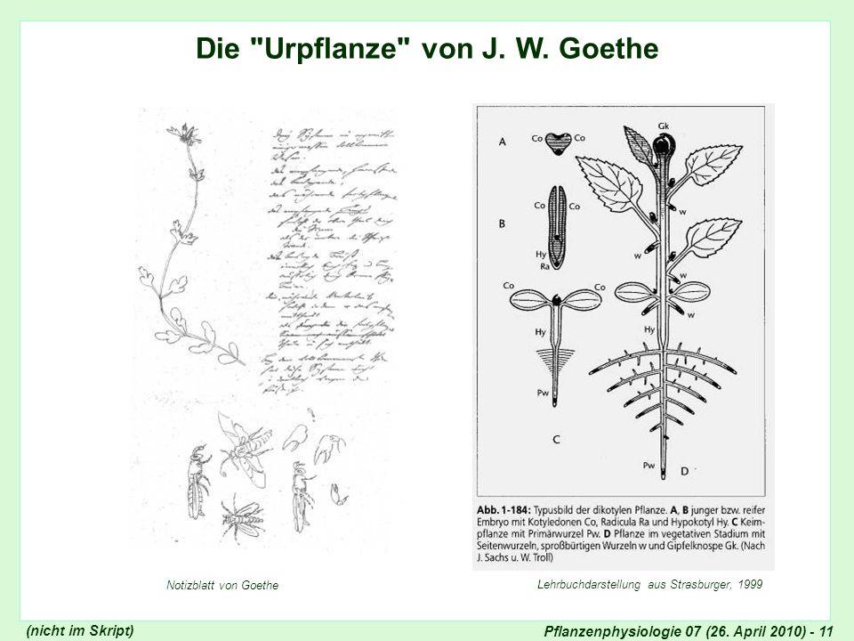 Die Urpflanze von J. W. Goethe