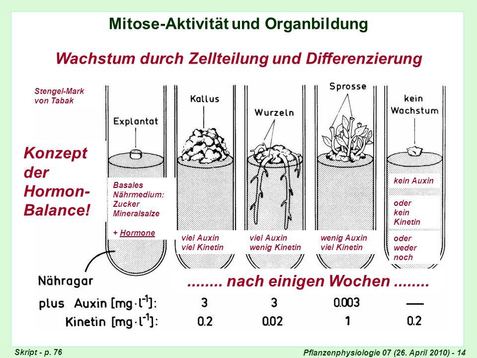 Mitose-Aktivität und Organbildung