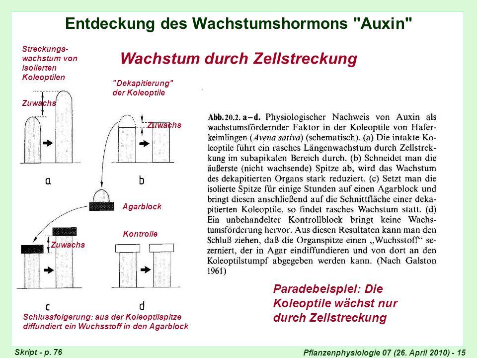 Entdeckung des Wachstumshormons Auxin Wachstum durch Zellstreckung