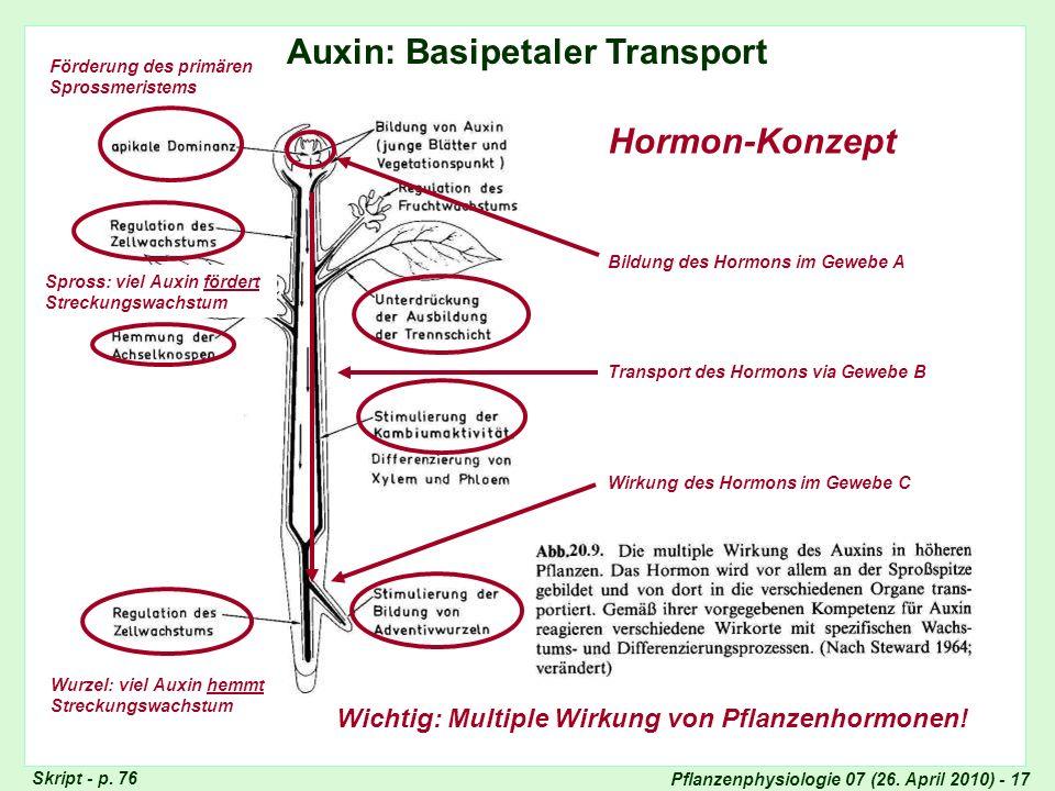 Auxin: Basipetaler Transport