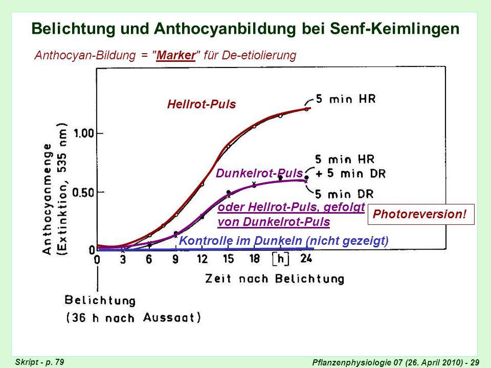 Anthocyan-Bildung bei Senf-Keimlingen