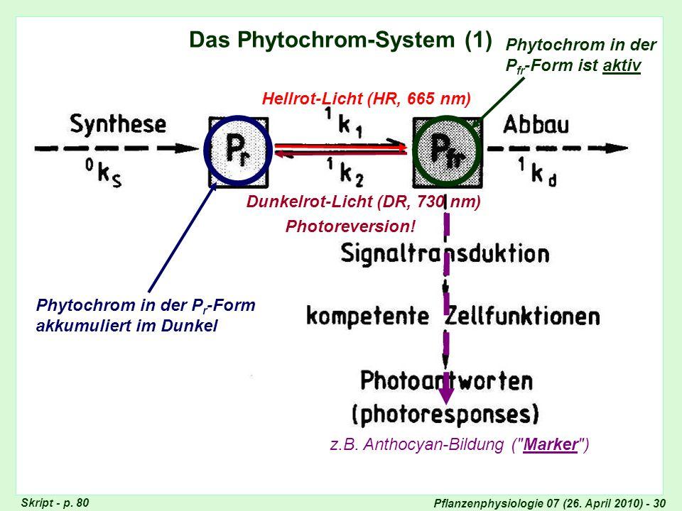 Das Phytochrom-System (1)