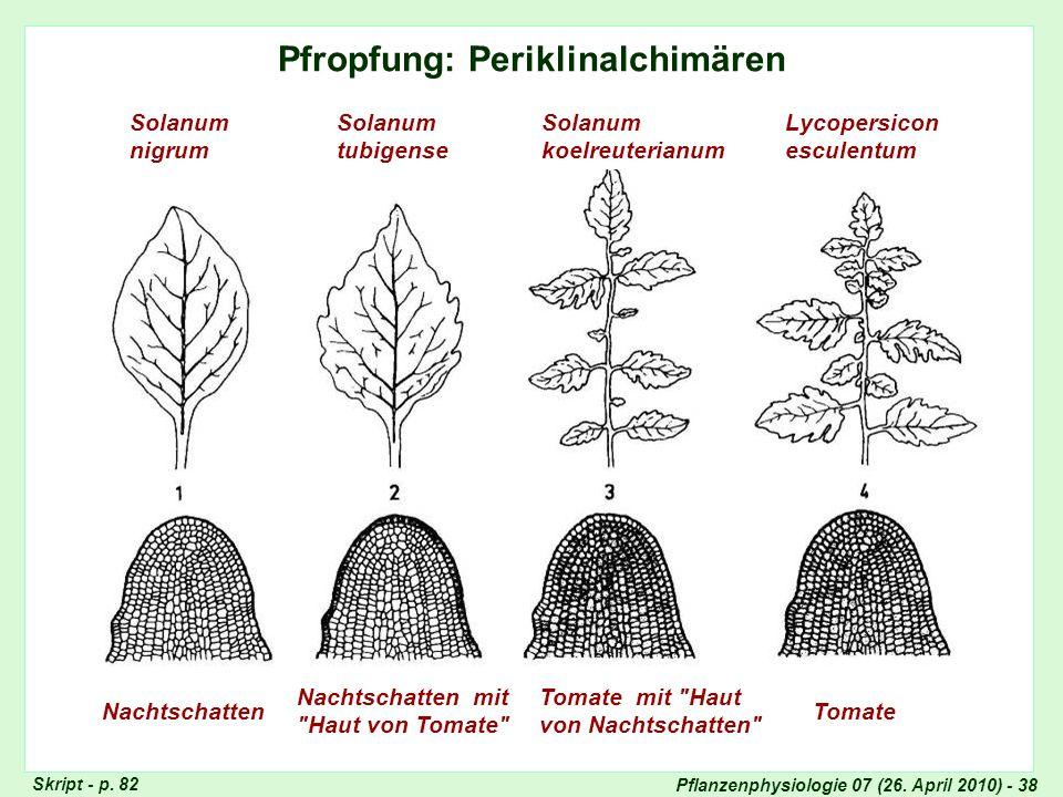 Pfropfung - Periklinalchimären