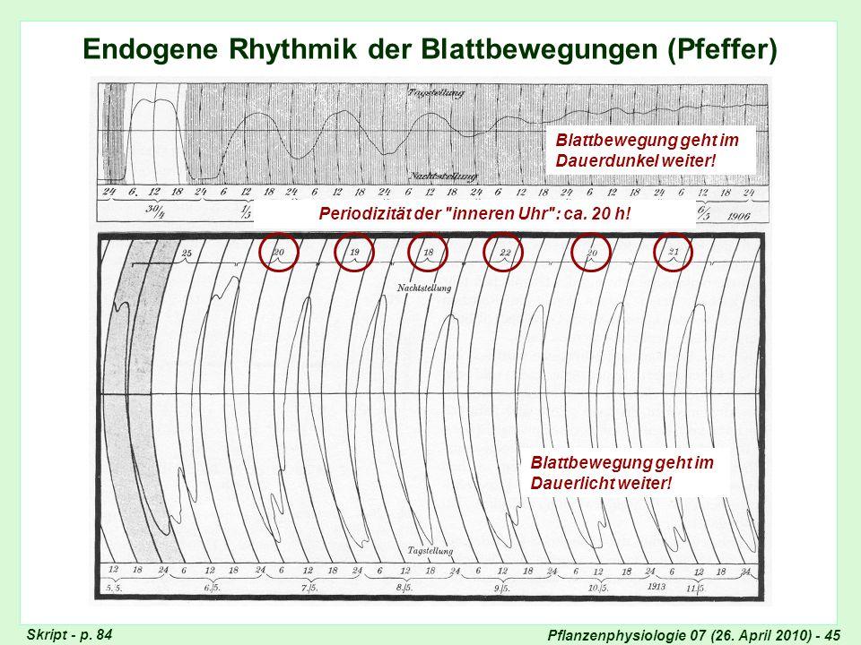 Endogene Rhythmik: Blattbewegungen