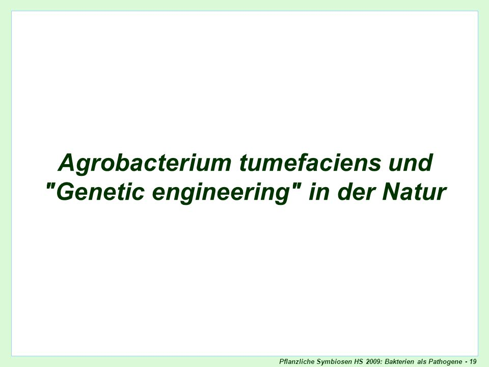 Agrobacterium tumefaciens und Genetic engineering in der Natur