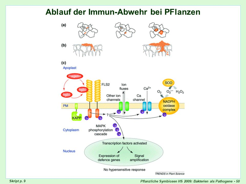 Review Innate Immunity