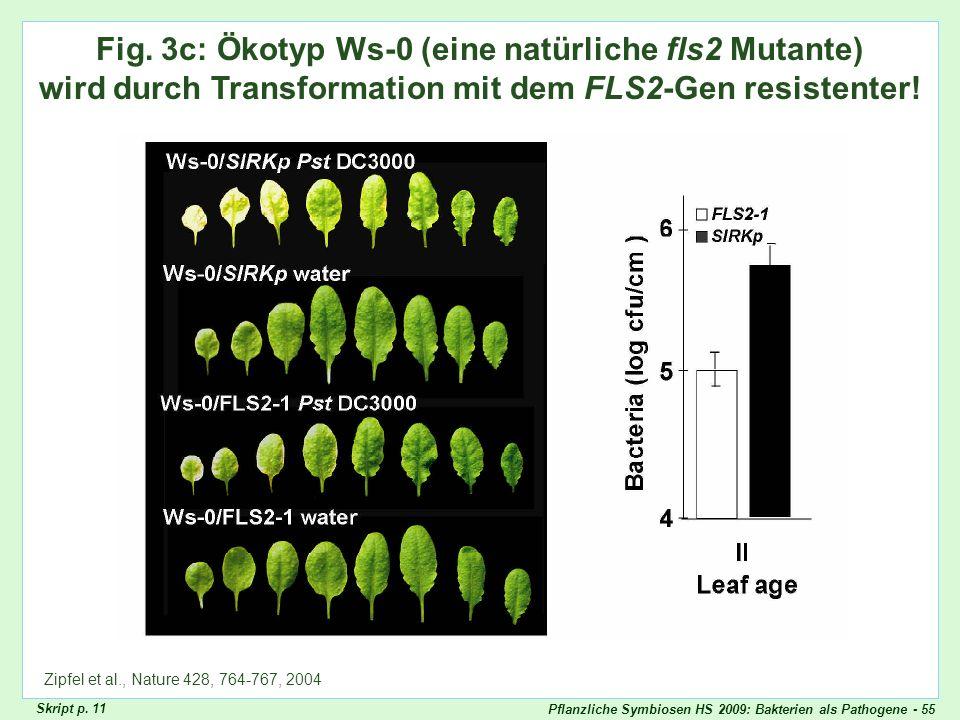 Zipfel Fig. 3cFig. 3c: Ökotyp Ws-0 (eine natürliche fls2 Mutante) wird durch Transformation mit dem FLS2-Gen resistenter!