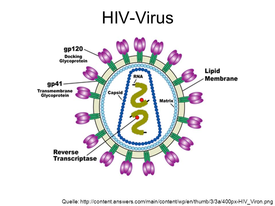 HIV-Virus Quelle: http://content.answers.com/main/content/wp/en/thumb/3/3a/400px-HIV_Viron.png