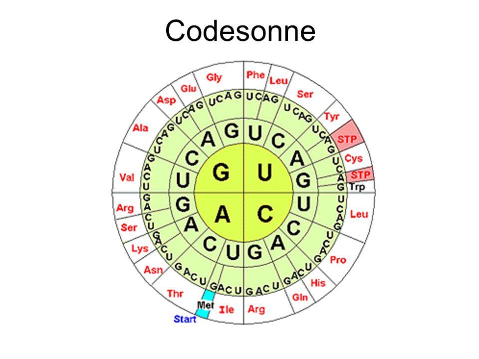 Codesonne