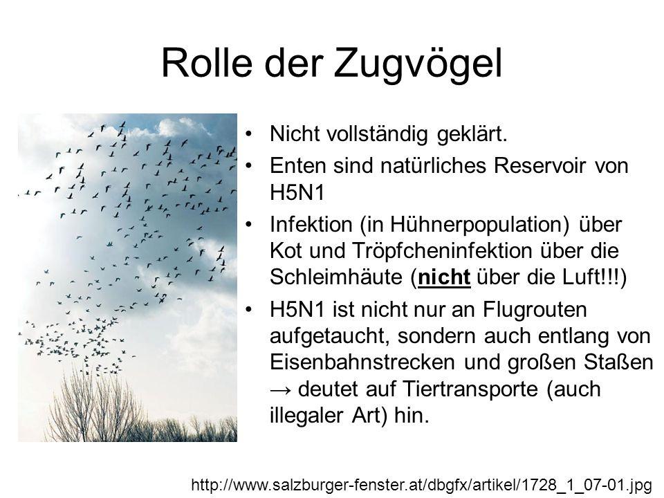 Rolle der Zugvögel Nicht vollständig geklärt.