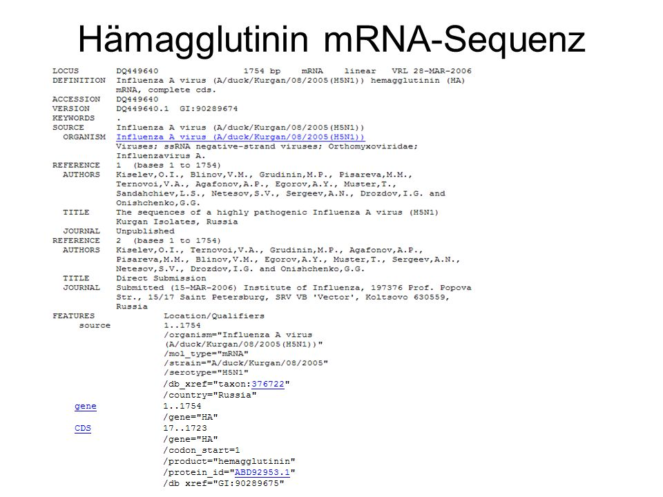 Hämagglutinin mRNA-Sequenz