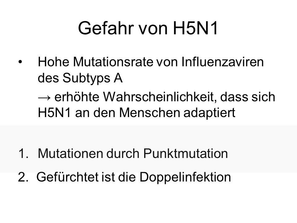 Gefahr von H5N1 Hohe Mutationsrate von Influenzaviren des Subtyps A