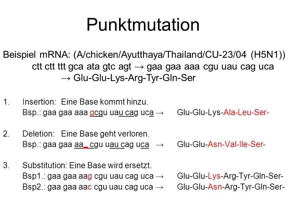 Punktmutation Beispiel mRNA: (A/chicken/Ayutthaya/Thailand/CU-23/04 (H5N1)) ctt ctt ttt gca ata gtc agt → gaa gaa aaa cgu uau cag uca.
