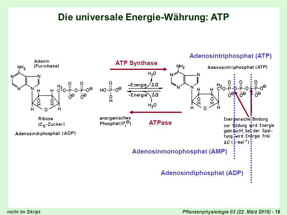 Die universale Energie-Währung: ATP