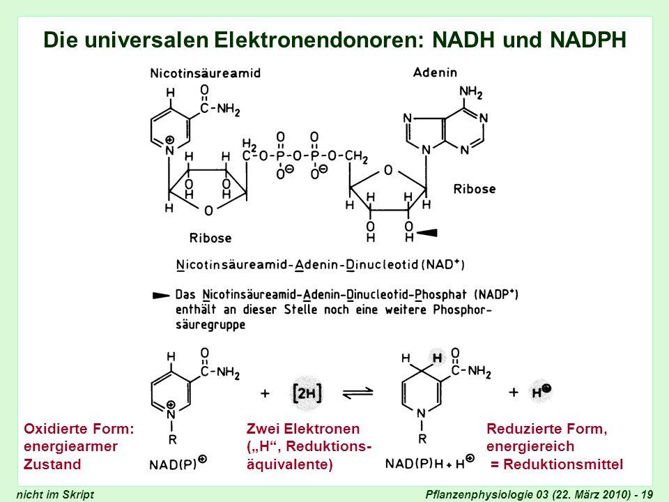 Die universalen Elektronendonoren: NADH und NADPH
