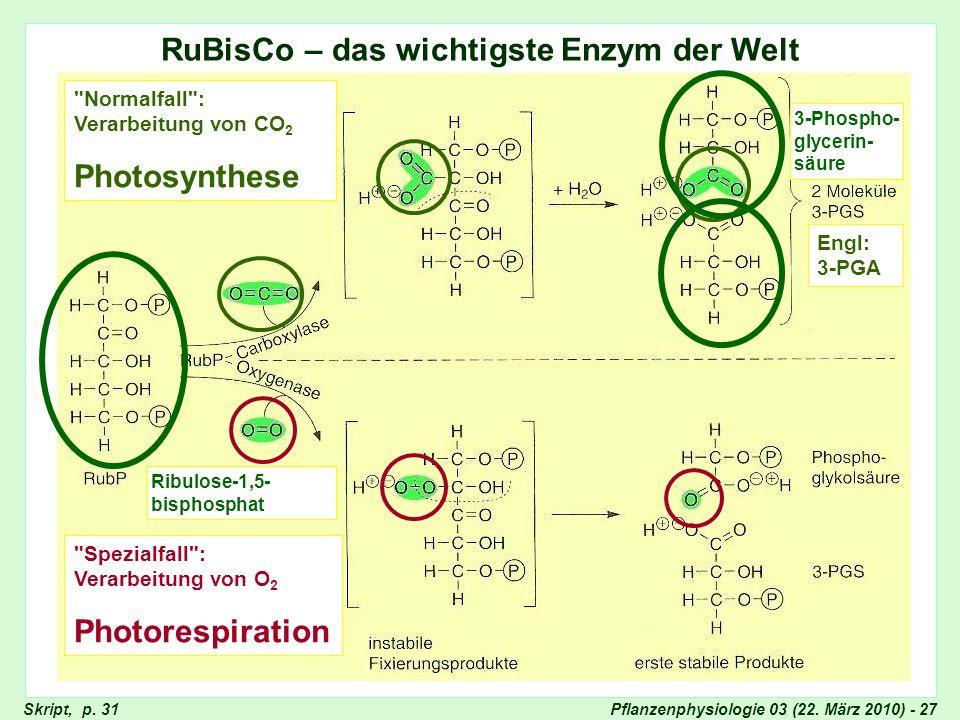 RuBisCo – das wichtigste Enzym der Welt