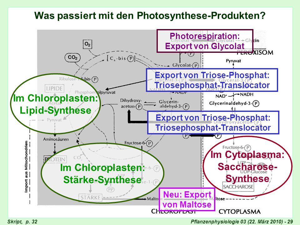 Was passiert mit den Photosynthese-Produkten