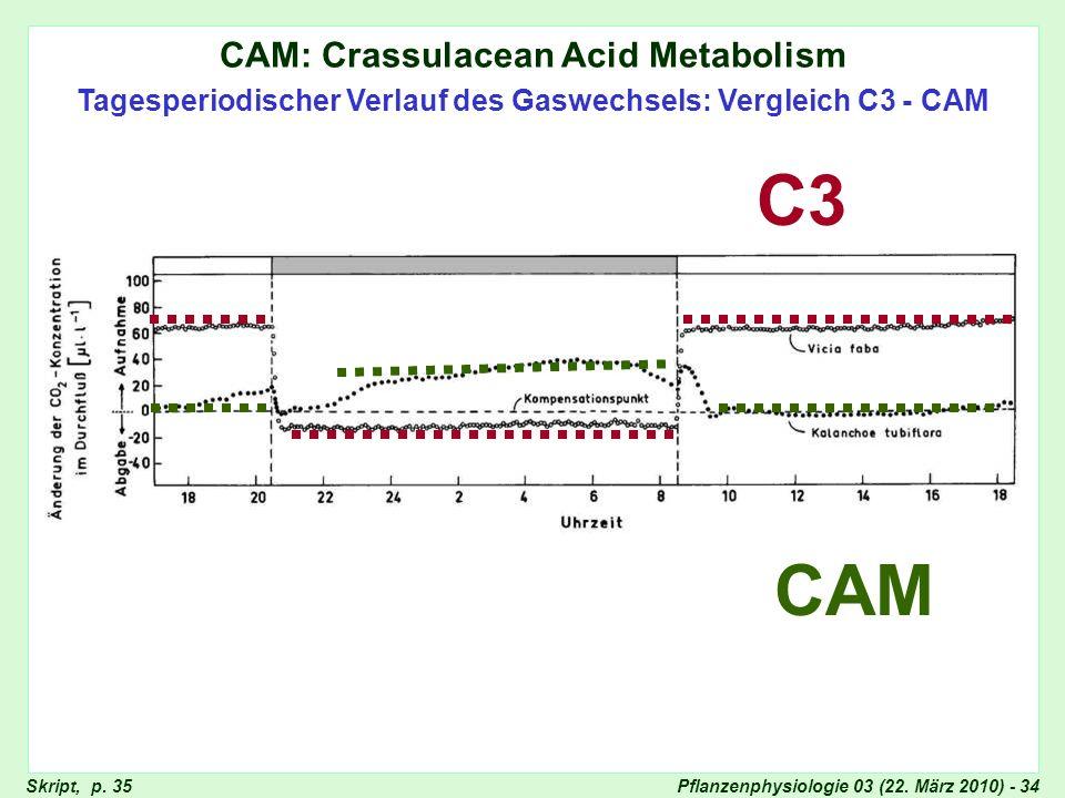 CAM-Pflanzen im Tageslauf