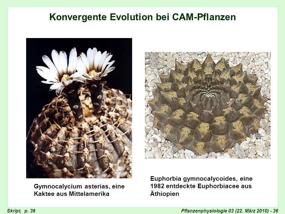 Konvergente Evolution