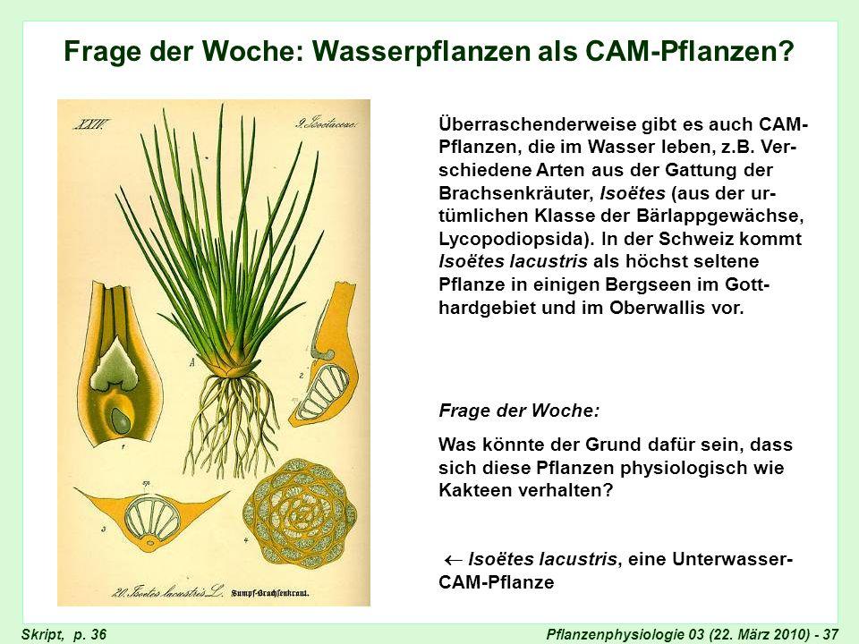 Frage der Woche: Wasserpflanzen als CAM-Pflanzen