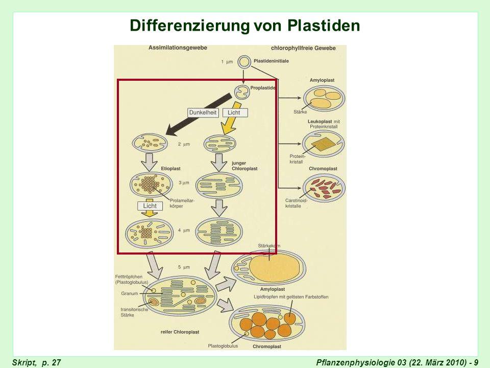 Differenzierung von Plastiden