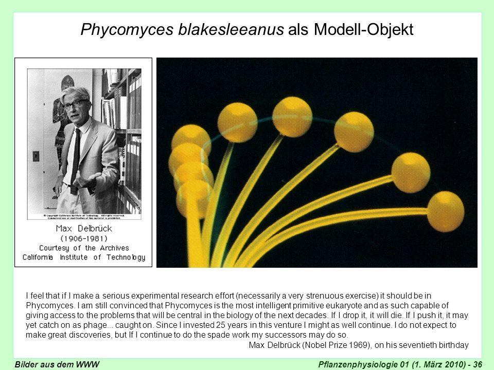Phycomyces blakesleeanus als Modell-Objekt