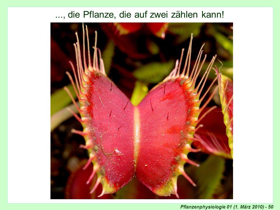..., die Pflanze, die auf zwei zählen kann!