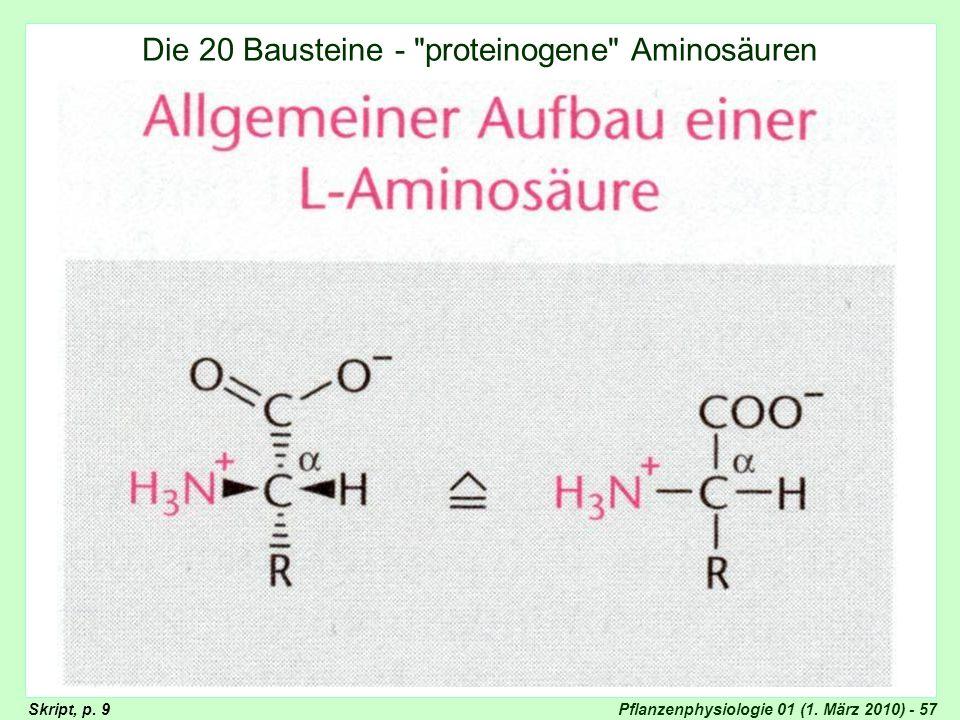 Aufbau der Aminosäuren