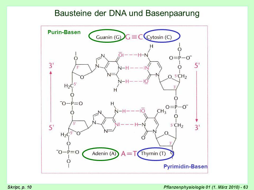 Bausteine der DNA und Basenpaarung