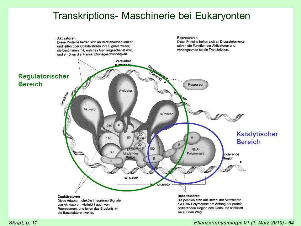 Transkriptions- Maschinerie bei Eukaryonten