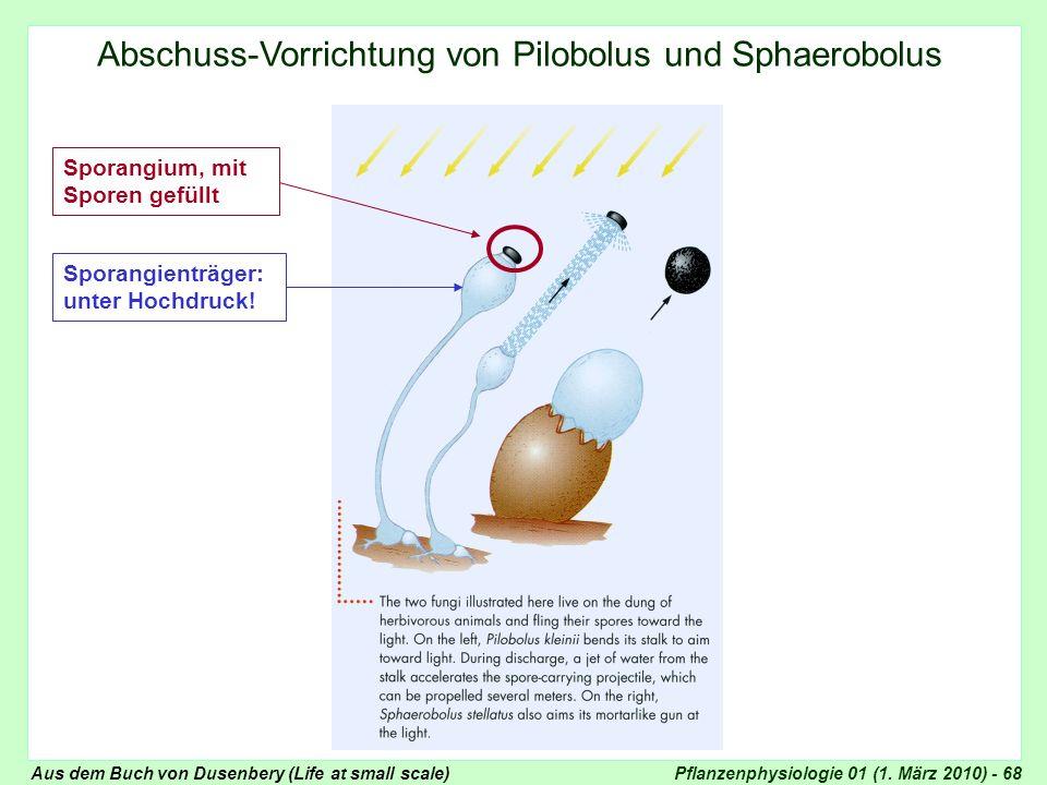 Abschuss-Vorrichtung von Pilobolus und Sphaerobolus