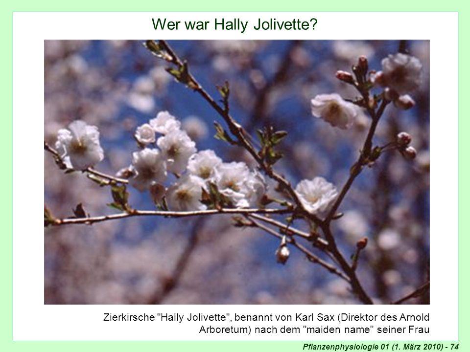 Zierkirsche Hally Jolivette
