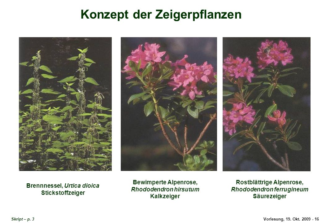 Konzept der Zeigerpflanzen
