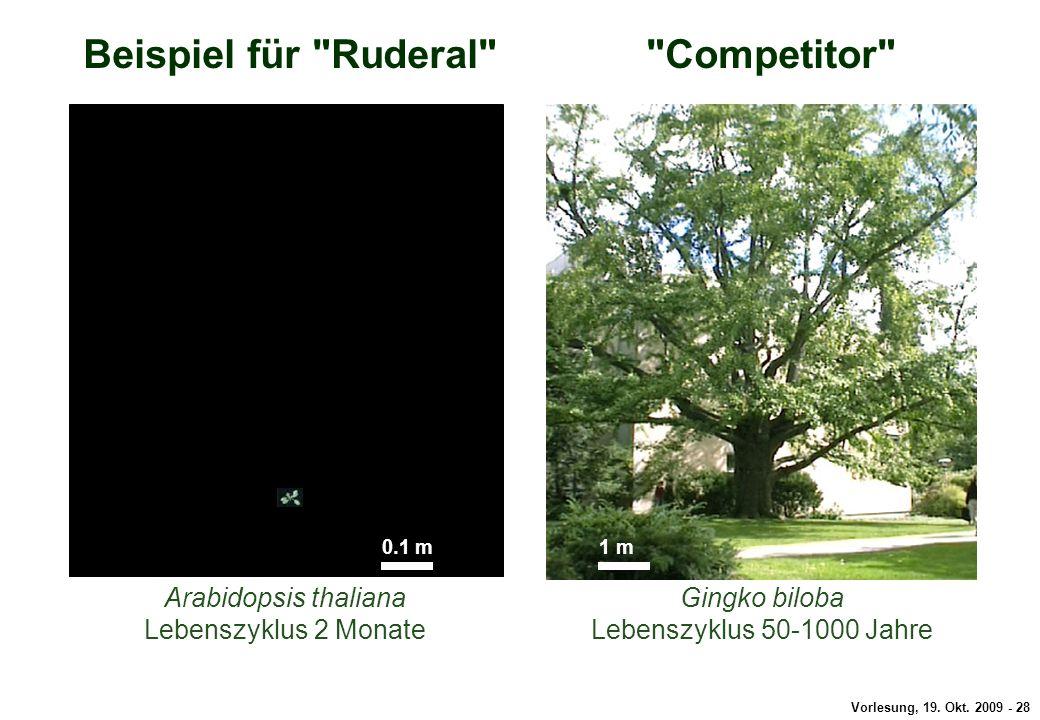 Beispiel für Ruderal Competitor