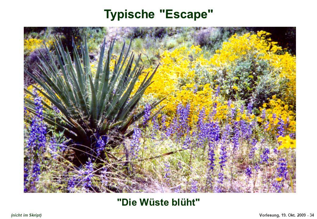 Typische Escape Die Wüste blüht Typische Escape