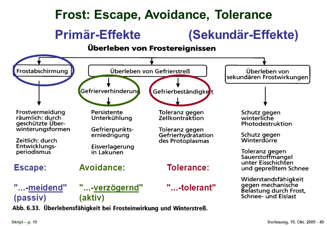 Escape, Avoidance, Tolerance