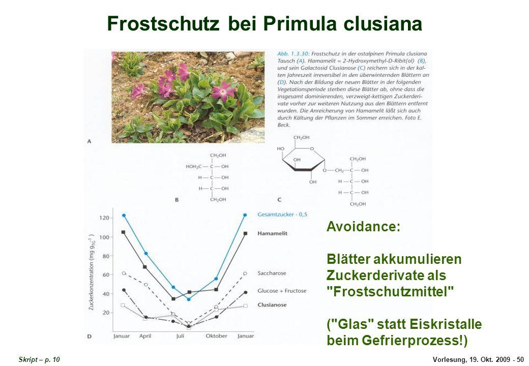 Frostschutz bei Primula clusiana 2