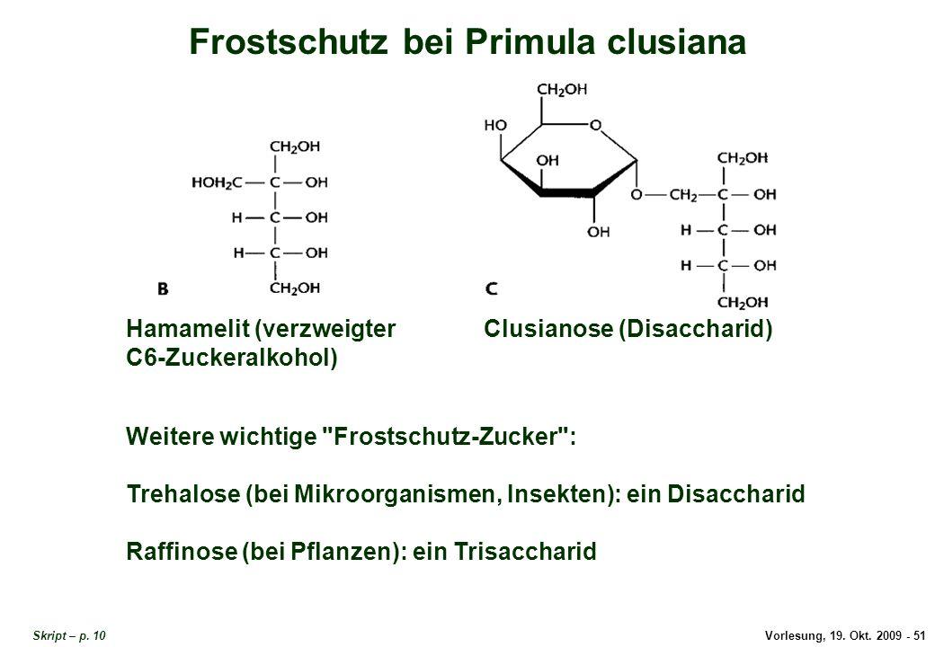 Frostschutz bei Primula clusiana 3