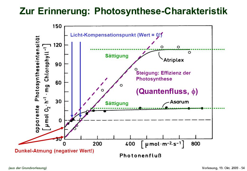 Photosynthese-Charakteristik
