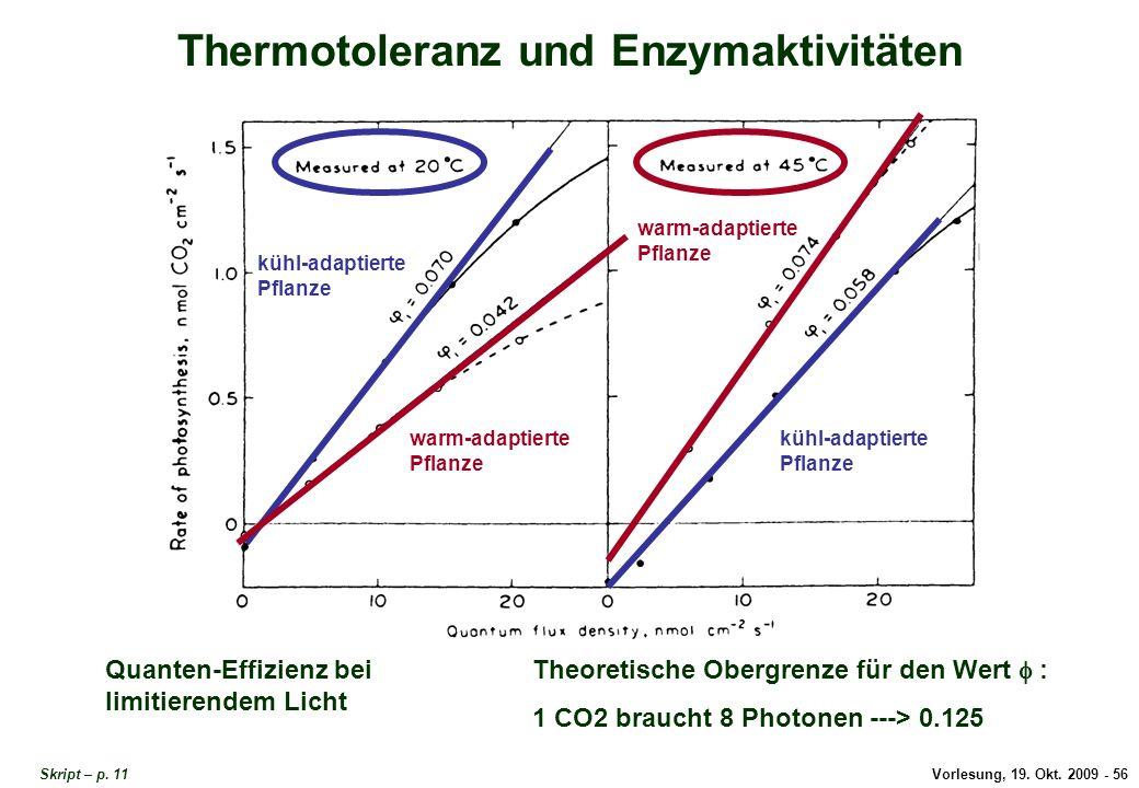 Thermotoleranz und Enzymaktivitäten 3