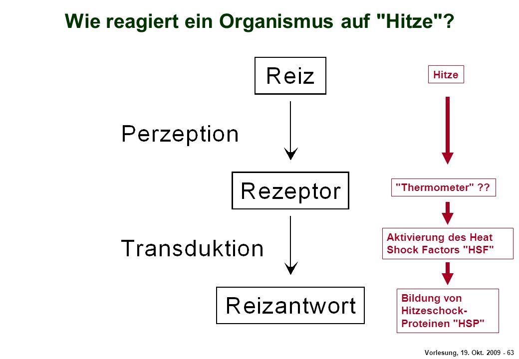 Wie reagiert ein Organismus auf Hitze