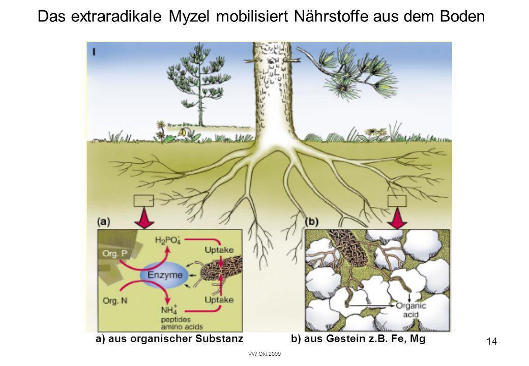 Das extraradikale Myzel mobilisiert Nährstoffe aus dem Boden