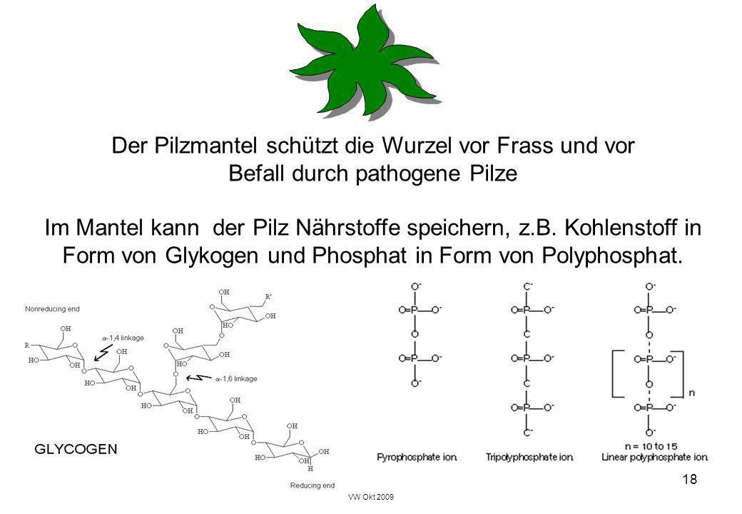 Der Pilzmantel schützt die Wurzel vor Frass und vor