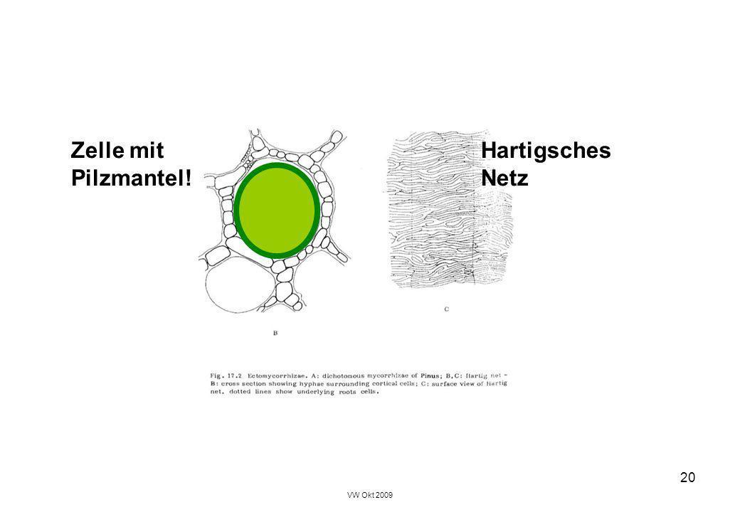 Zelle mit Hartigsches Pilzmantel! Netz VW Okt 2009