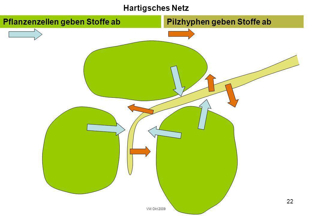 Pflanzenzellen geben Stoffe ab Pilzhyphen geben Stoffe ab