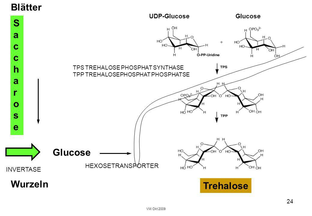 Blätter Saccharose Glucose Wurzeln Trehalose UDP-Glucose Glucose