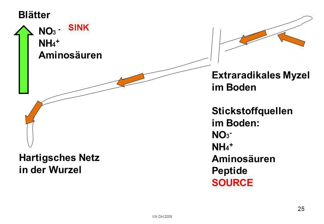 Blätter NO3 - SINK NH4+ Aminosäuren Extraradikales Myzel im Boden